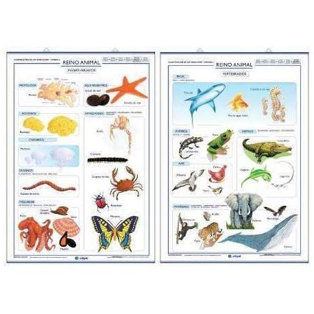 Animales invertebrados: ejemplos y caractersticas - con fotos 96